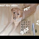 How to Make a Simple Whac-A-Mole Toy for Your Pet