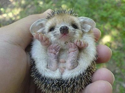 Hedgehog Pincushion Instruction