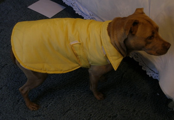 Weather resistant coat for you pet