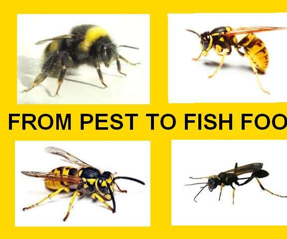 FROM PEST TO FISH FOOD!