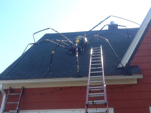 Giant Spider With Webified Victim!