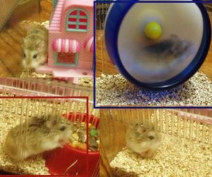 Hamster to Mongolia