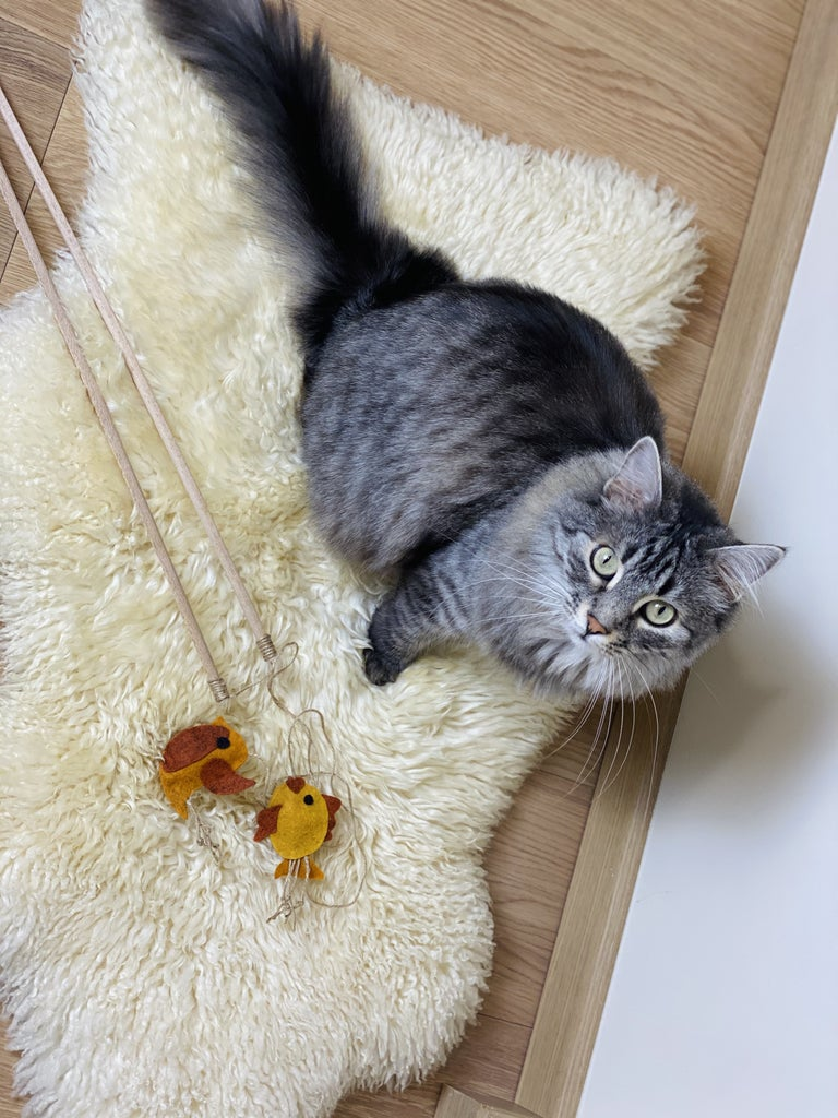 I Hope You'll Enjoy My Cat's Photo Gallery