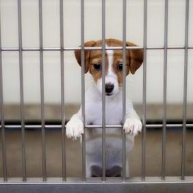 dog-pound-puppy.jpg