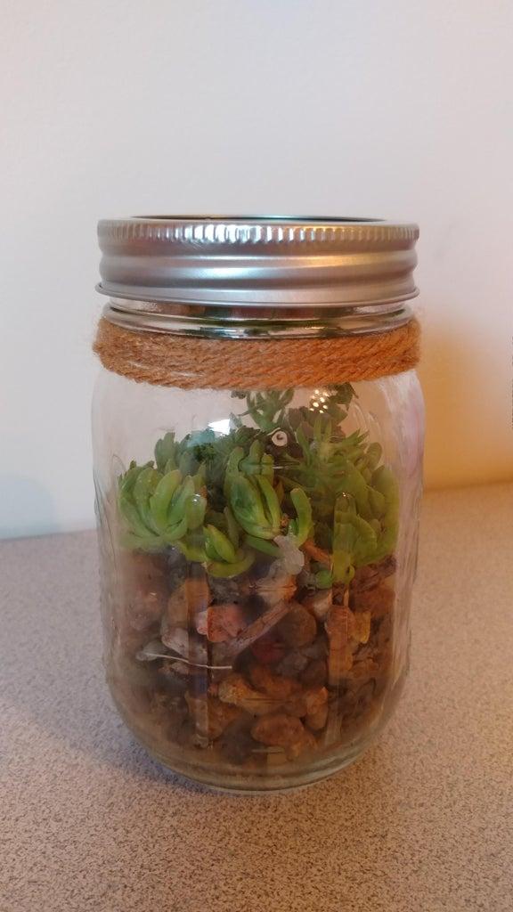 DIY Plant in a Jar