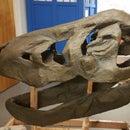 Making a T-Rex Skull From Scratch