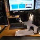 Anti-Keyboard Cat Attack Mat (AKCAM)