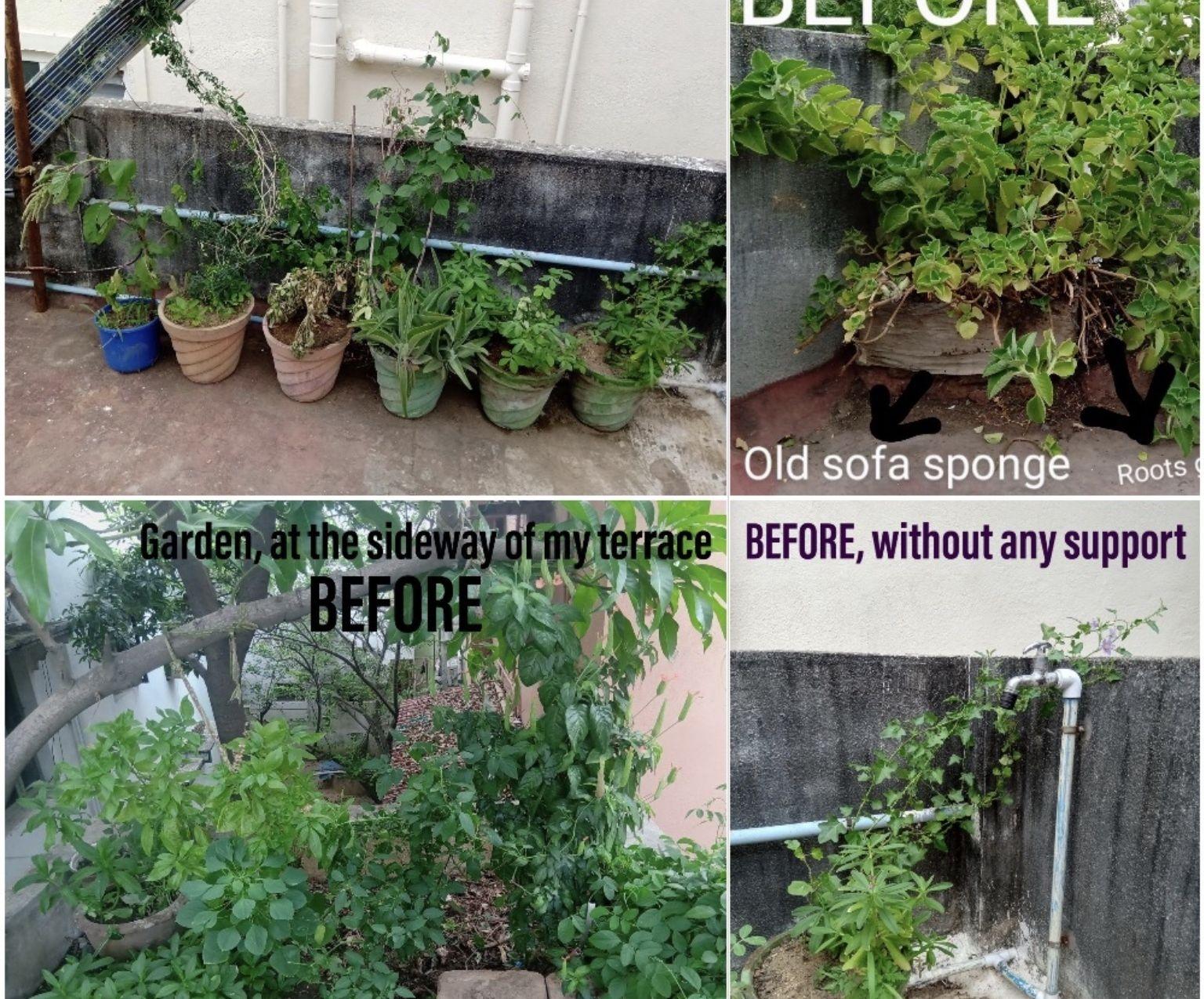 Declutter Around Terrace Garden!
