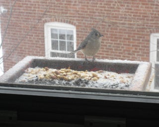 How To Make A Windowsill Open Tray Bird Feeder 7 Steps Instructables