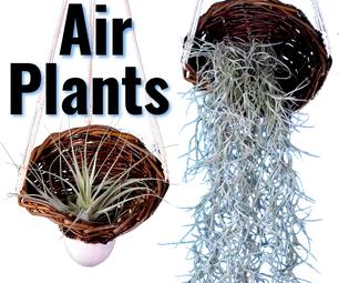 Basketry Planter 2.0 - Air Plants