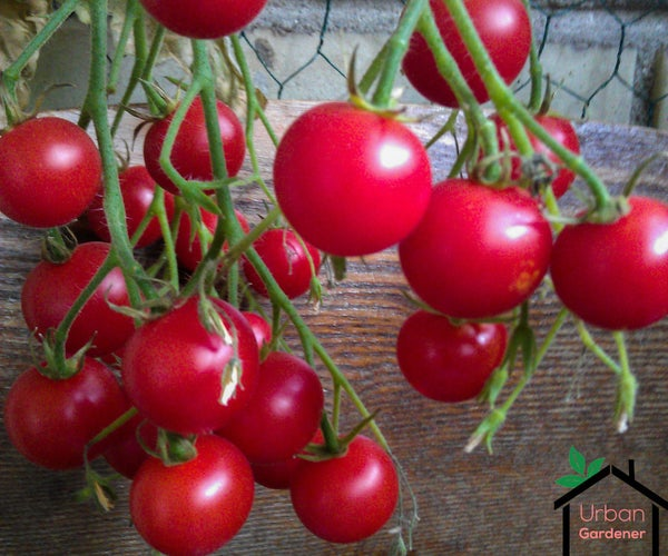 Container Gardening in Small Balcony or Space