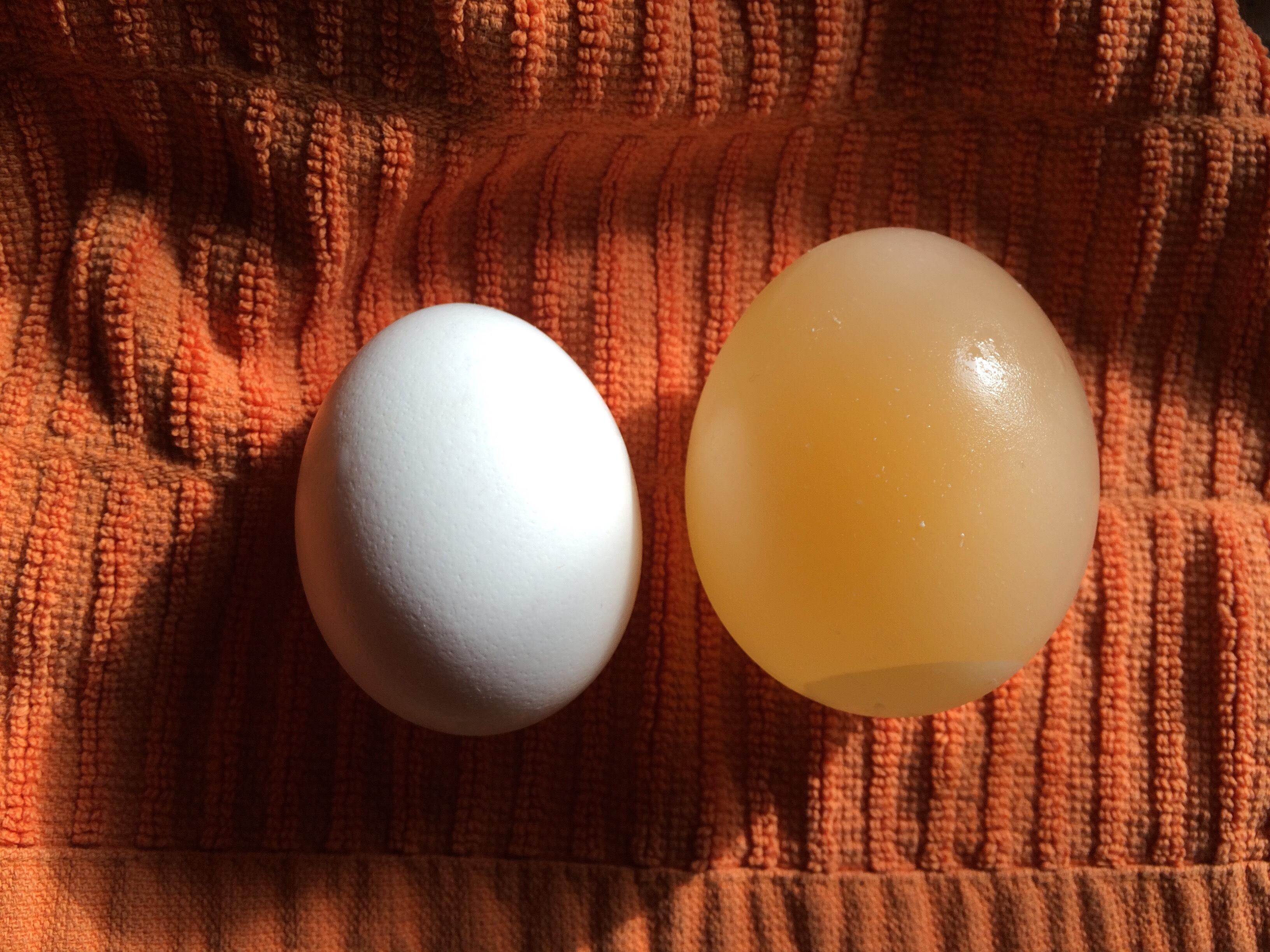 How To Grow an Egg Using Osmosis