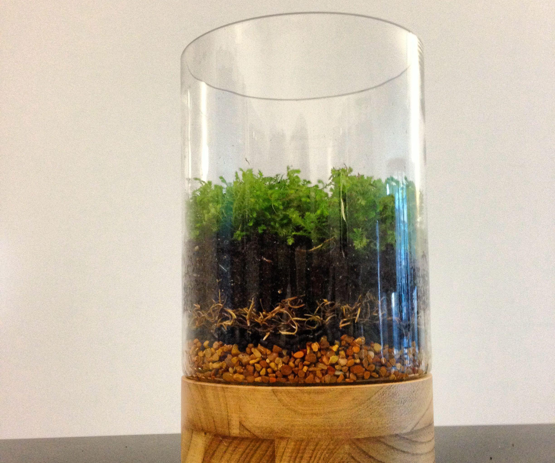 How to Make a Moss Terrarium