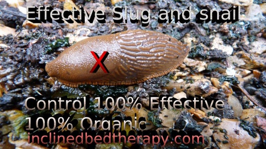 Effective Slug and Snail Trap