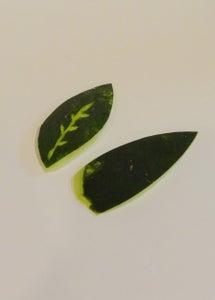 Make Some Leaves!