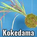 Kokedama String Garden