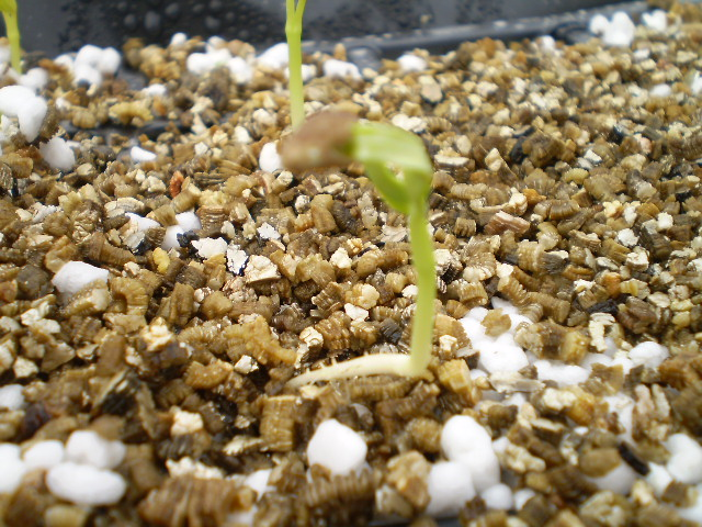 How To Make A Simple Incubator For Germination
