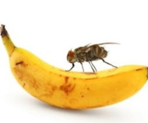 How to Keep Fruit Flys Away in Your House