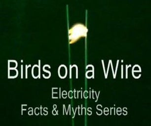 Birds on a Wire - Electricity: Facts & Myths