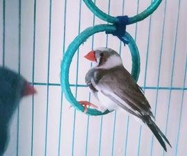 Bird Swings and Bird Treats