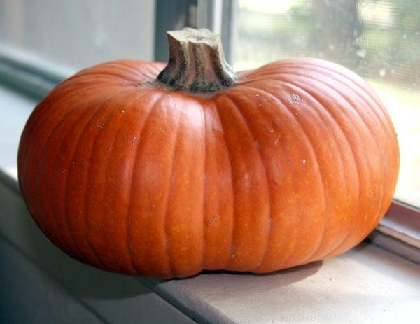How to Bake a Fresh Pumpkin (for Pie, Etc)