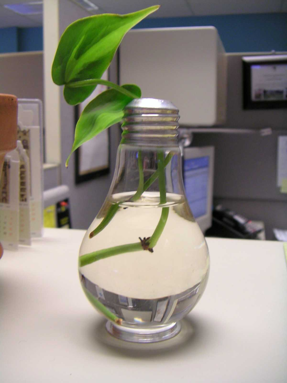 Reusing Lightbulbs: as planters or mini terrariums