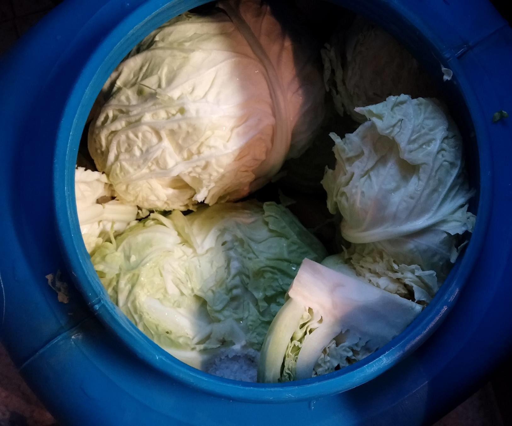 Varză murată - Pickled cabbage