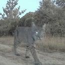 Arduino Wildlife Night Camera