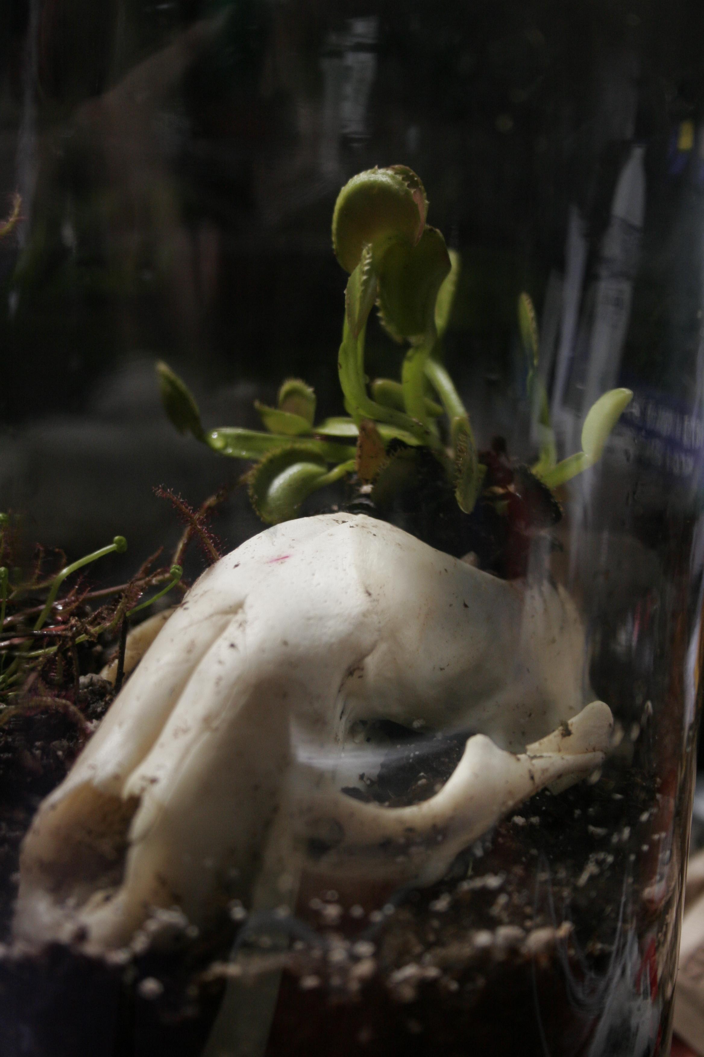 Carnivorous Plant Terrarium 7 Steps With Pictures Instructables