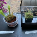 Carnivorous Plant Maintenance (so They Do Not Break)