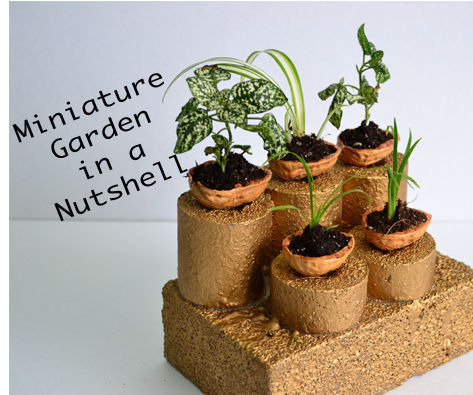 Miniature Garden in Nutshell