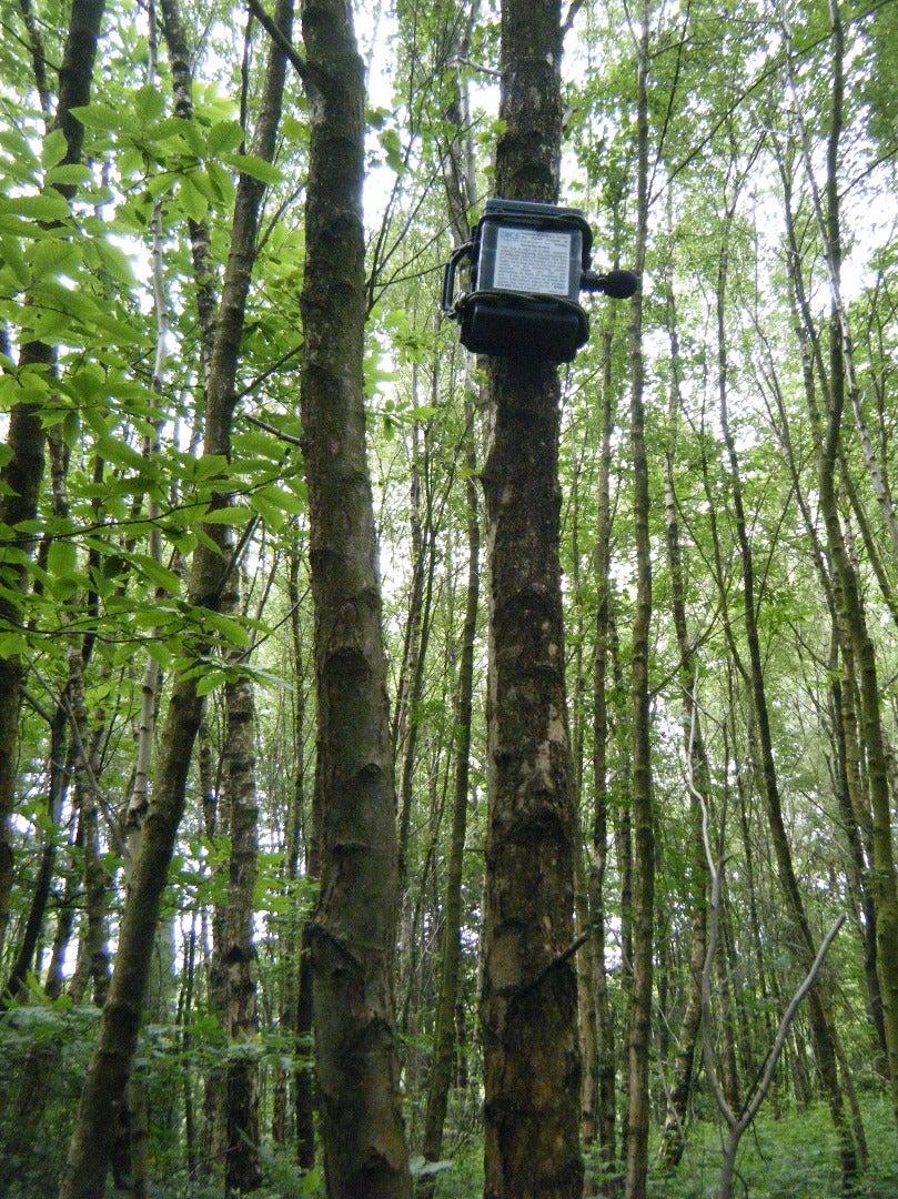 ARUPI - a Low-Cost Automated Recording Unit/Autonomous Recording Unit (ARU) for Soundscape Ecologists