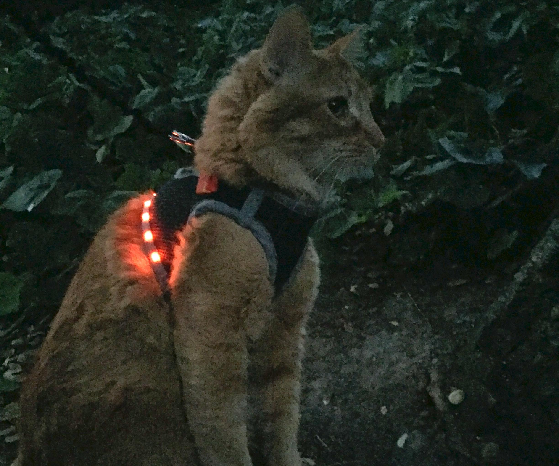 Make an LED Cat Harness