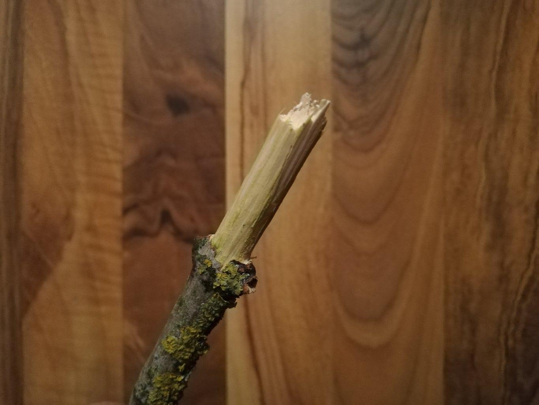 Prepare Your Branch