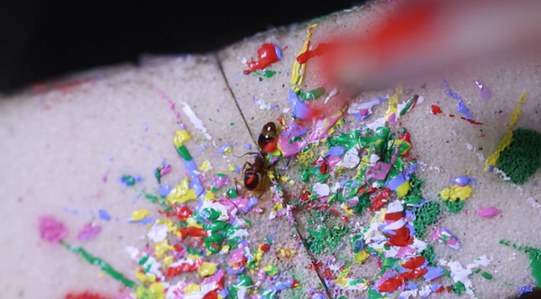 Paint Ants for Science