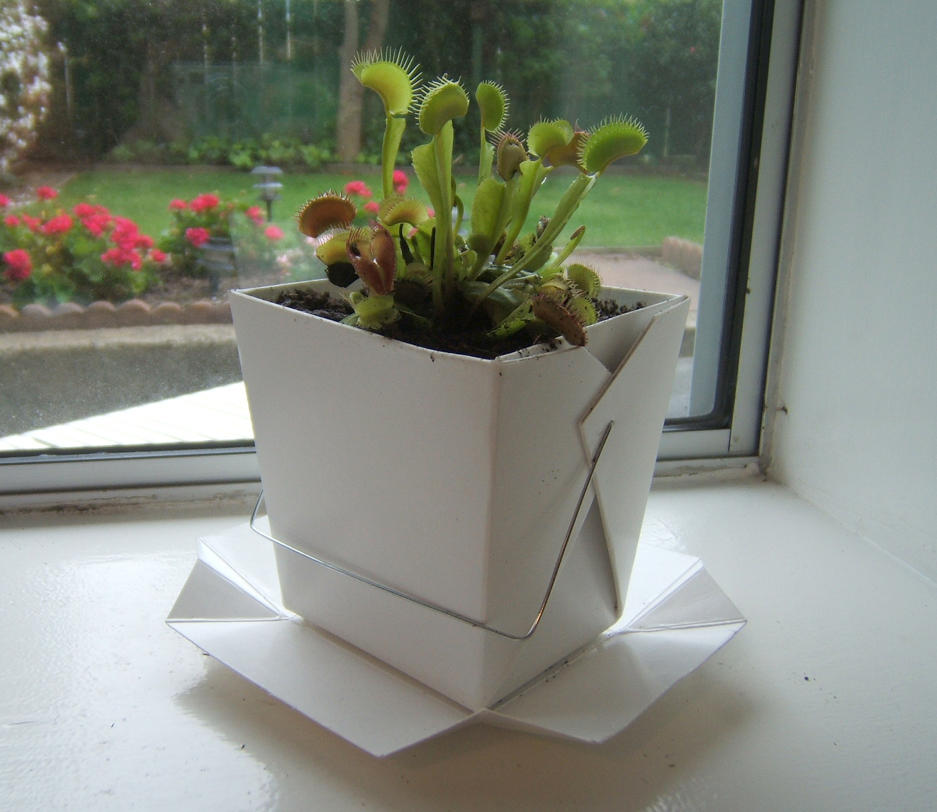 Recycled Takeout Container Planter