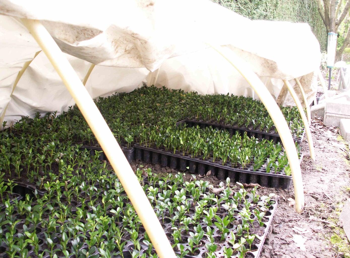 Miniature, Cuttings-starting, White Plastic Greenhouse