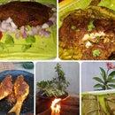 Fried Fish in Banana Leaf