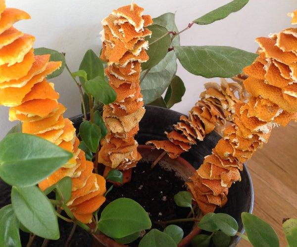 Orange Peel Skewers