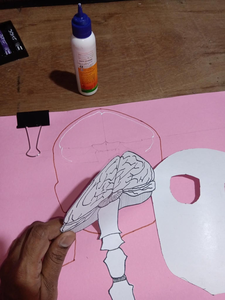 Layer 6 : Brain