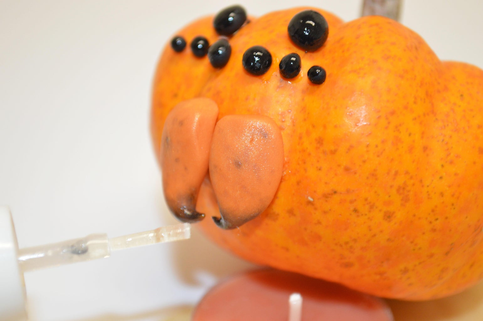 Glue the Chelicerae to the Pumpkin Spider's Face
