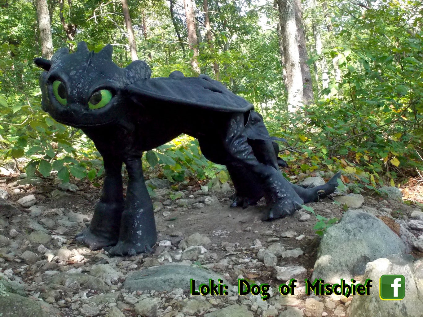 Toothless Costume (for Dogs!)