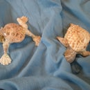 Desk Pets Made Out of Shells