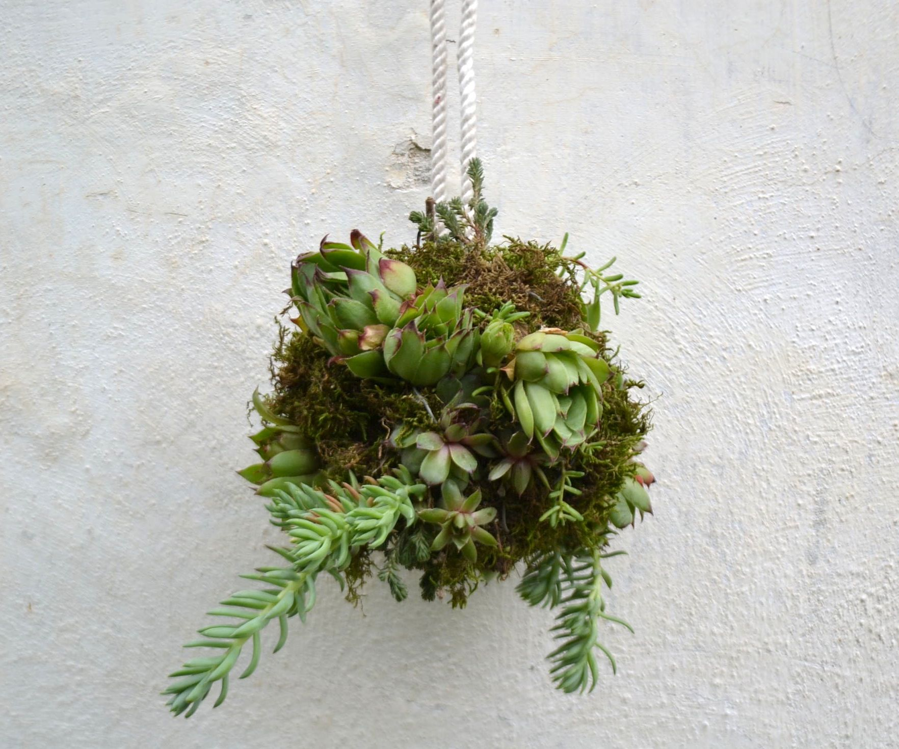 ●SUCCULENTS BALL●