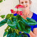 Anthurium: Care & Growing Tips for This Beautiful Blooming Houseplant