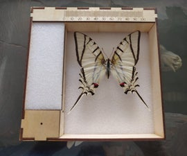 Entomology Photography Tray