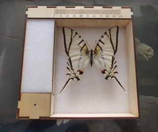 Entomology Photography Tray