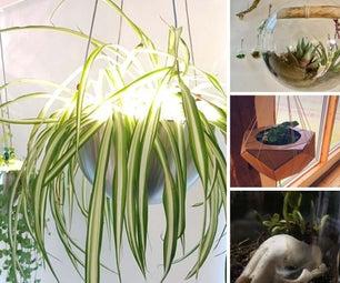 Carnivorous/Air Plants