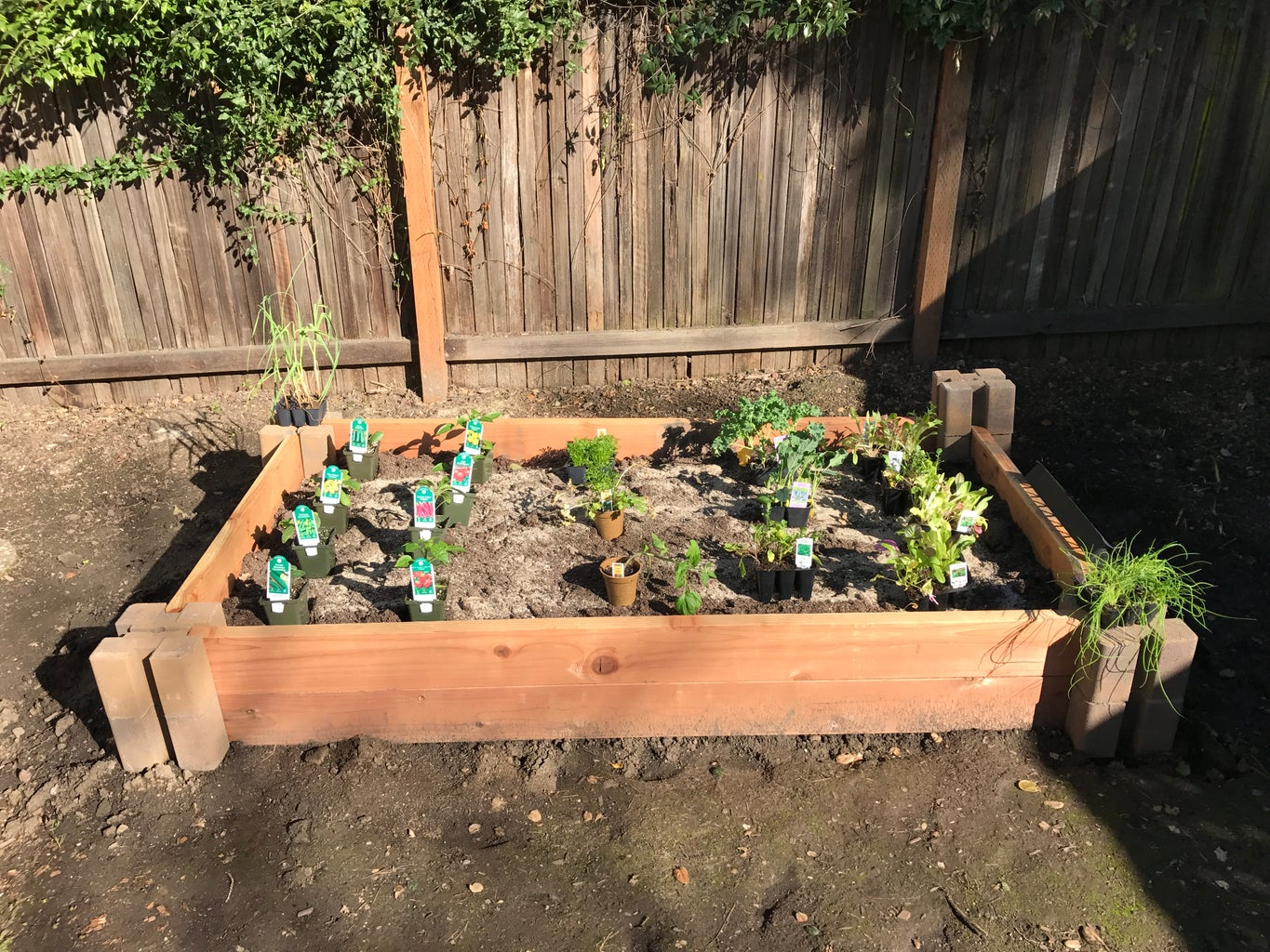 Layout Your Plants in Pots