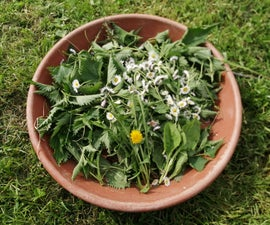 Edible Plants From Nature - Recipe